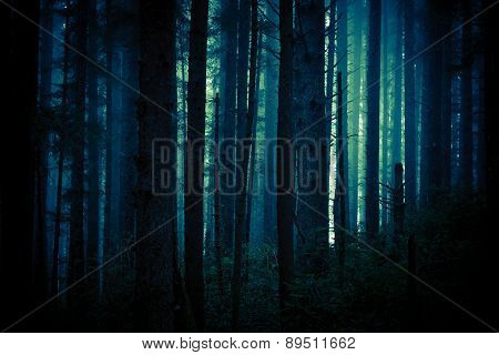 Dark Creepy Forest