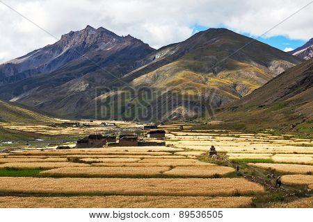 Dho Tarap Village, Dolpo, Nepal.