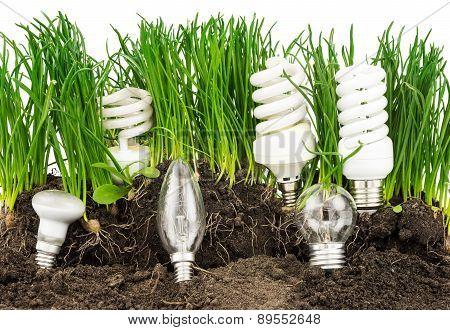 Light Bulbs, Energy-saving Lamps, Grass And Earth