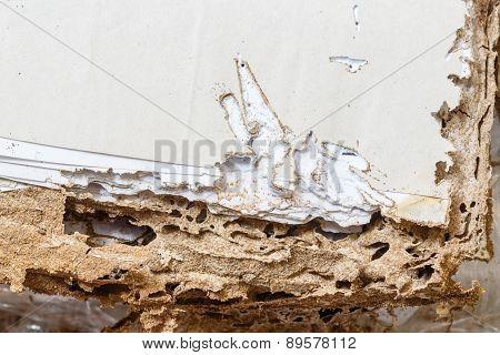 Paper Eaten By Termite