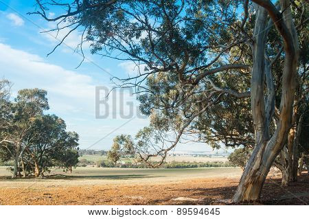 Wandoo Country