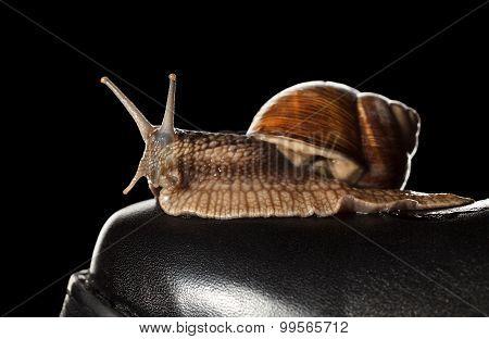 Snail On Boot
