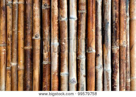 Background Texture Of Bamboo Canes