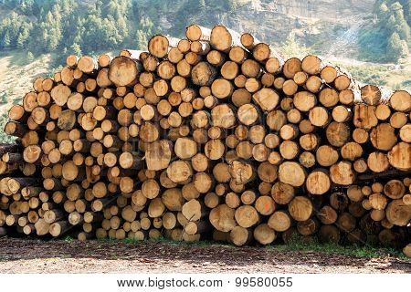 Large Woodpile Of Felled Trees