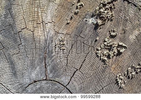 abstract texture of a cross cut of a tree or wood stub for an empty background poster