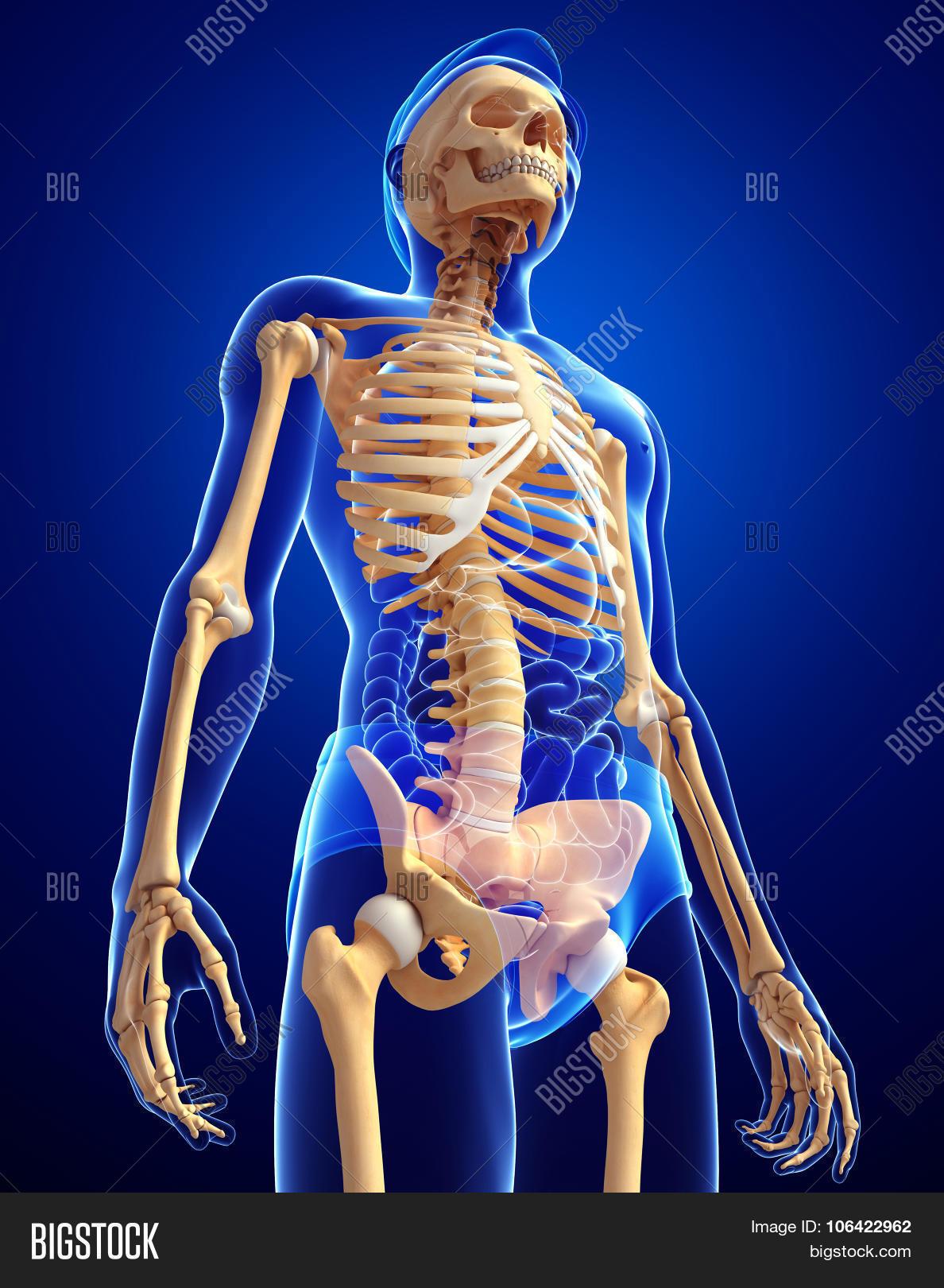 Human Skeleton Side Image Photo Free Trial Bigstock