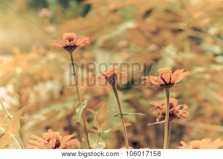 Retro Flowers Background