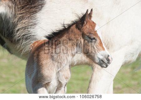 Newborn Foal Portrait