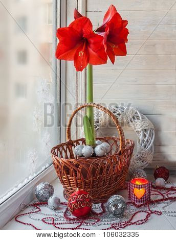 Red Hippeastrum In The Window