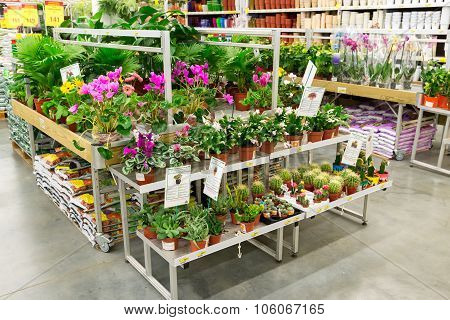 MOSCOW, RUSSIA - FEBRUARY 15, 2015: Potted plants in  store Leroy Merlin. Leroy Merlin is a French home-improvement and gardening retailer serving thirteen countries