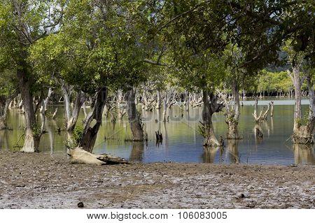 Liquica Lake And Marshland, East Timor
