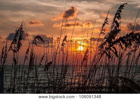 Sea Oats At Sunset Along The Beach