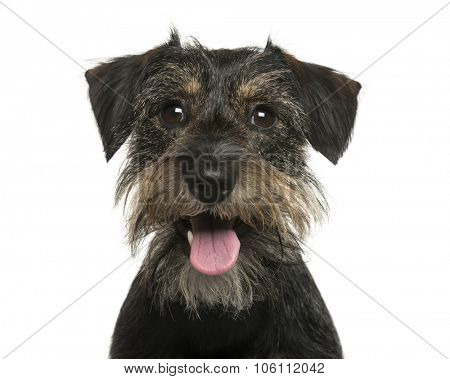 Close-up of a Crossbreed dog in front of white background