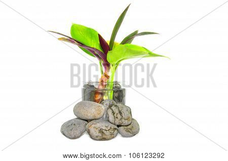 Zen And Spa Stone With Small Plant Over White Background