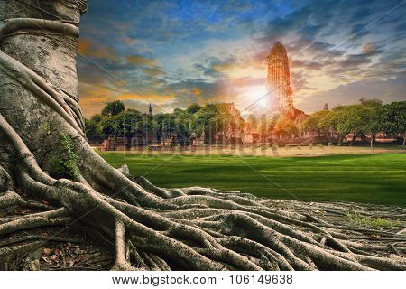 Big Root Of Banyan Tree Land Scape Of Ancient And Old  Pagoda In History Temple Of Ayuthaya World He