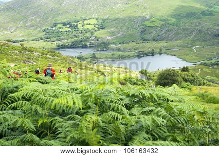 Wild Ferns With Hikers
