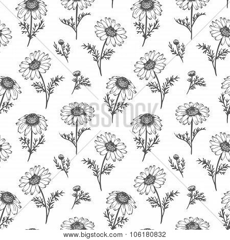 Chamomile Vector Pattern