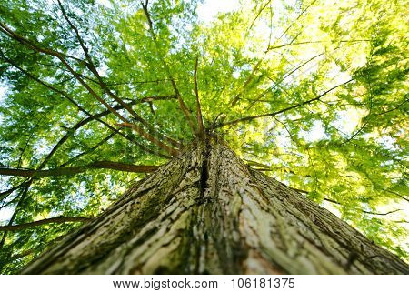Large tree canopy