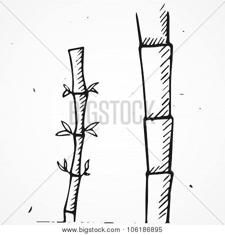 Hand Drawn Bamboo Branches