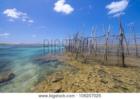 Fish Traps On Brazilian Reef