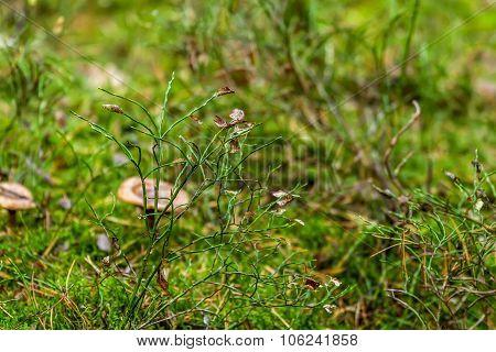 Plants In Shaman
