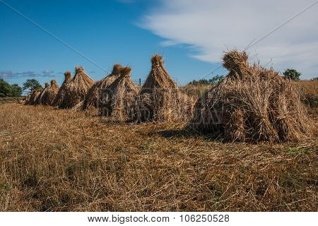 Sheaves In Kizhi, Karelia