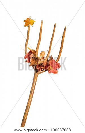 Clearing autumn fall leaves - conceptual image with leaves on pitchfork