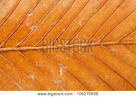 Colorful dry leaf closeup