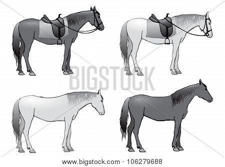Horse,  Illustration, Isolated