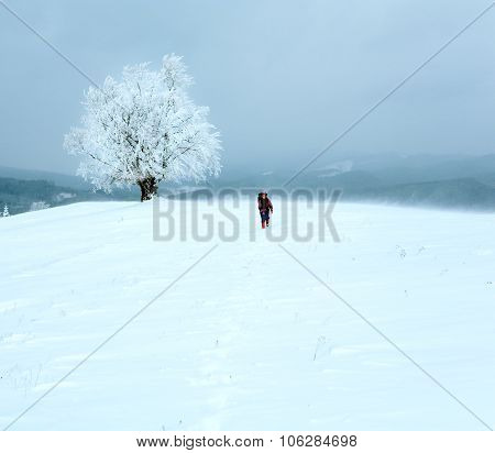 Winter Inclement Snowy Landscape