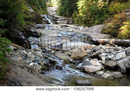 A Creek in the Pacific Northwest