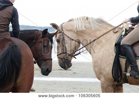 Two horses with riders touch noses