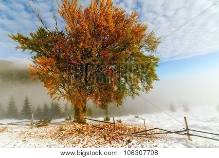 Colorful Autumn Trees With Snow