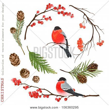 Christmas Collection of decorative vector elements with with bullfinches for your design.
