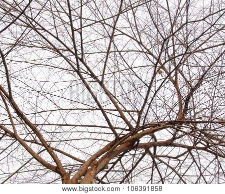 Tree Near Death