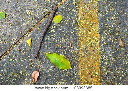 Flowers, leaves and brushwood on asphalt road