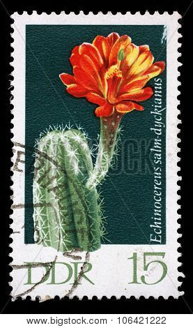 GDR - CIRCA 1970: a stamp printed in GDR shows Echinocereus salm-dyckianus, Flowering Cactus Plant, circa 1970