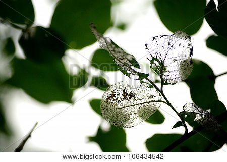 Leaves. Spider mite.