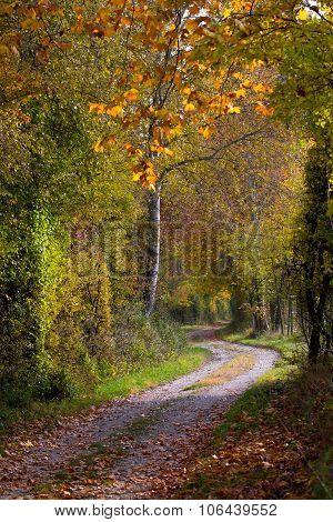 Path Through Autumn Forest