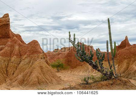 Cactus In Bright Orange Canyon In Tatacoa Desert
