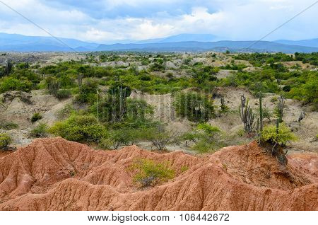 Two Color Sandstone Formation Of Tatacoa Dry Tropical Forest Covered With Green Bushes And Cactus