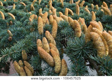 A Beautiful Cones