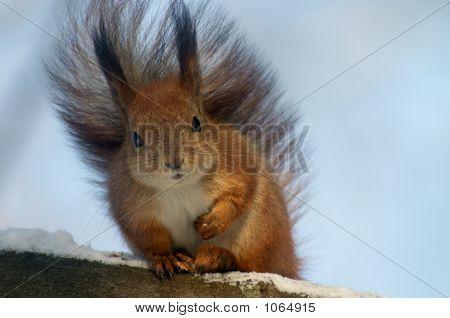 Comic Squirrel