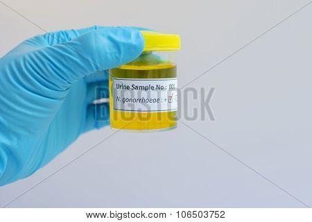 Neisseria gonorrhoeae bacteria
