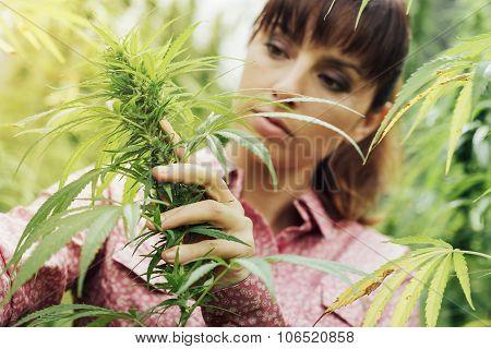 Woman Holding Hemp Flowers