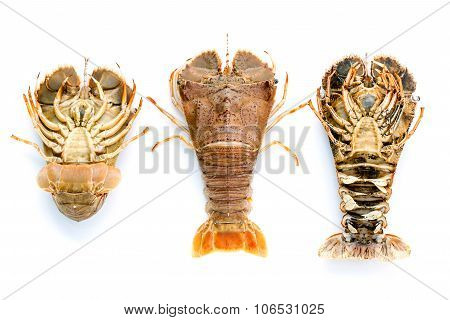 Flathead Lobster, Lobster Moreton Bay Bug, Oriental Flathead Lobster Isolate On White Background.