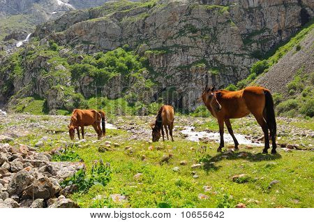 Horses and mountain river