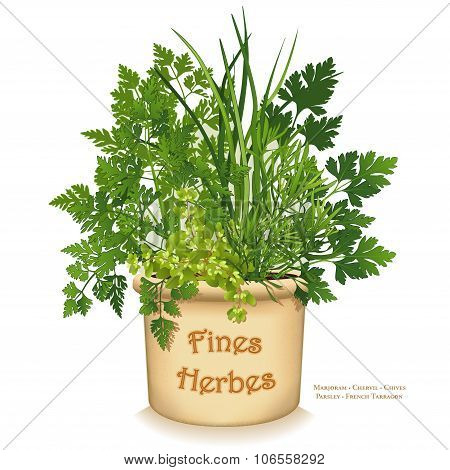 "Fines Herbes Garden Planter, ""fine herbs"" for traditional French cooking, left to right: Chervil, French Tarragon, Sweet Marjoram, Chives, Italian Parsley in clay flowerpot crock, isolated on white background. poster"