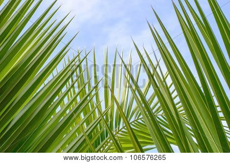 Palm Tree Branches With Cloudy Blue Sky And Copy Space For Text Background