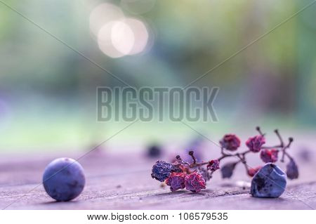 Withered Grape Cluster Artistic Selective Soft Focus Background